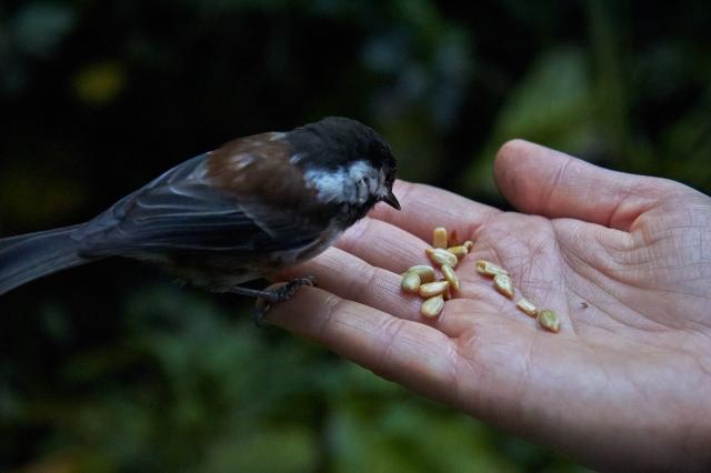 IMG_0119 Birdpeople