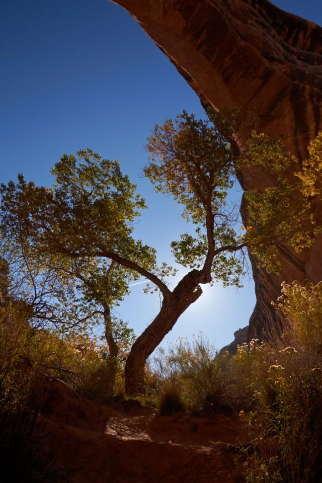 _MG_2754 Utah White Canyon