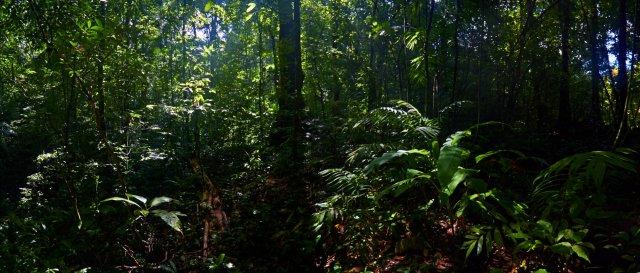 Jungle Mexico