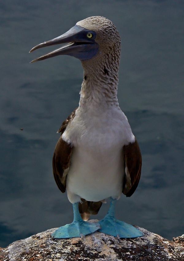 Galapagos (3)