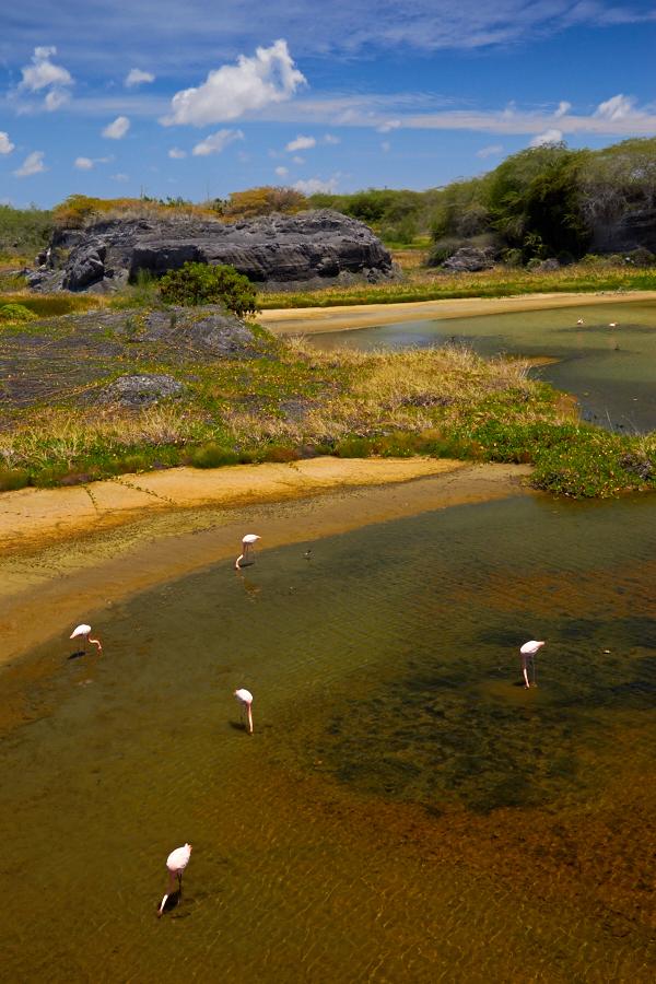 Otte frie og vaskeægte flamingoer blev det til.