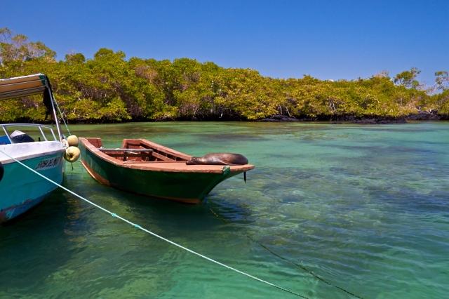 Galapagos Isabela havnen (3)