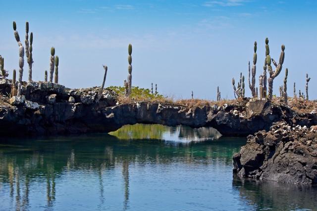 Galapagos Isabella havskildpadde og Pernille (2)
