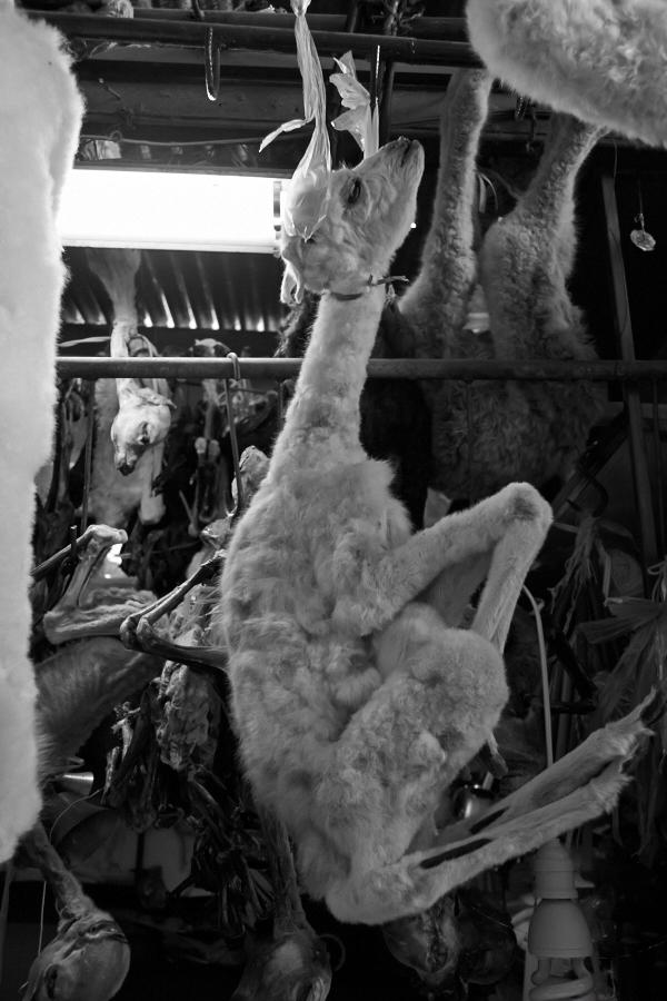 Døde dyrebabyer (2)