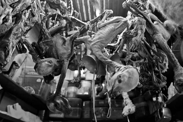 Døde dyrebabyer (4)